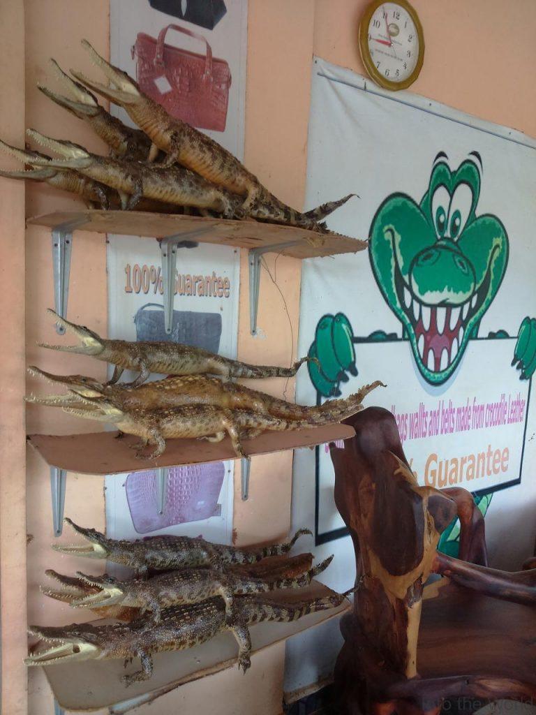 crocodile_16